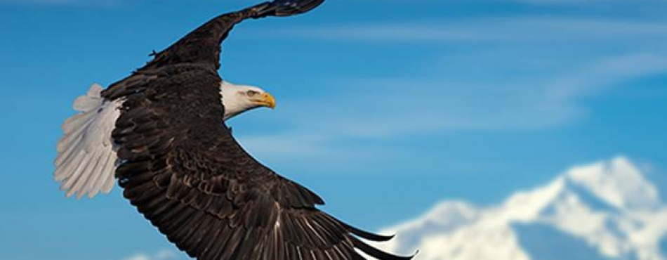 We invite you to explore our all-new 2019 Alaska Info Hub, an essential resource for learning about 1