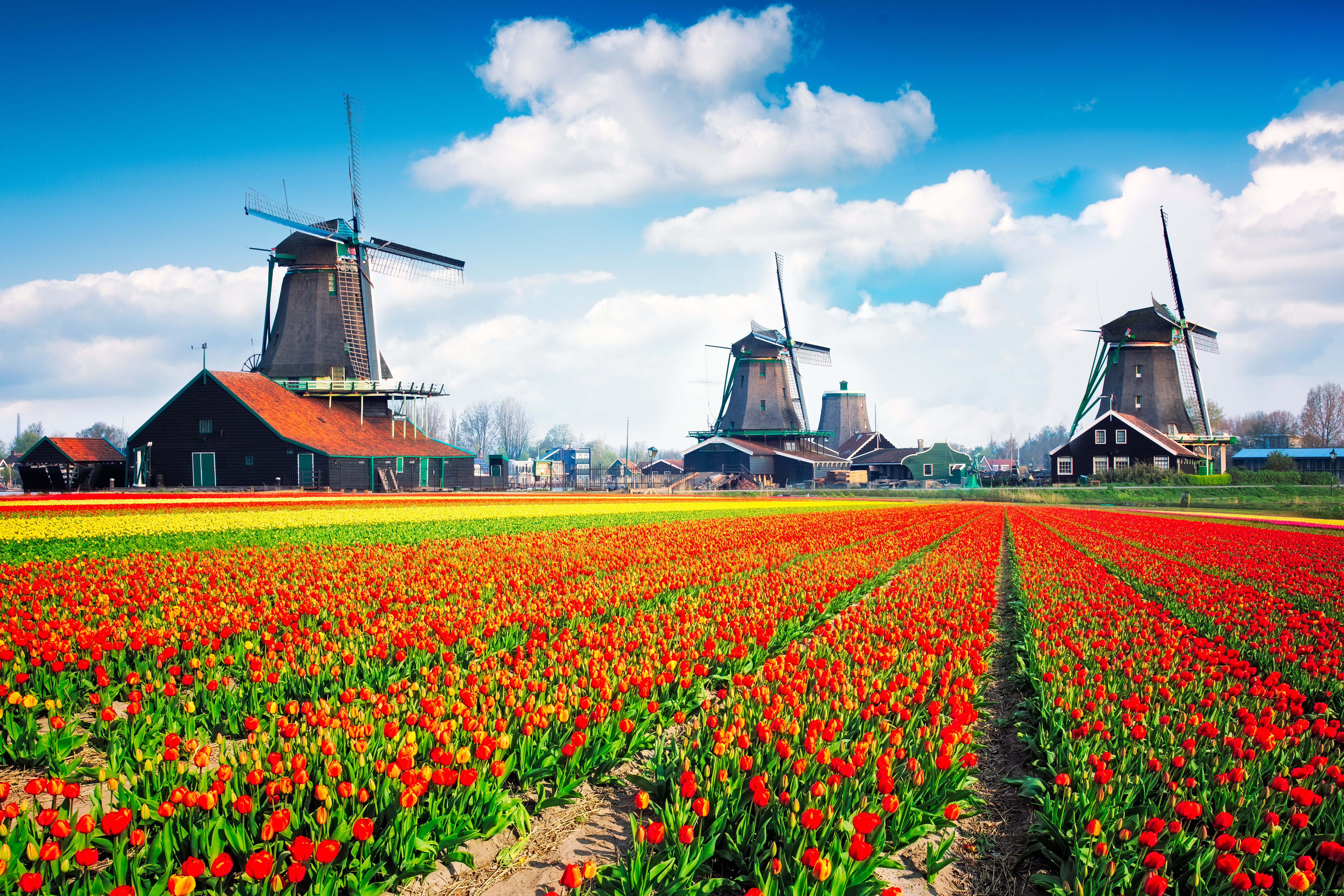 5 Memories You'll Never Forget on a Holiday Vacations Tour of Holland