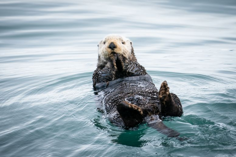 #OneWeekofWildlife: Inspiring Animals 2