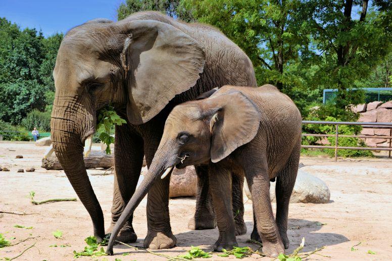 #OneWeekofWildlife: Inspiring Animals 6